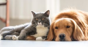 Sicherheit für Haustiere
